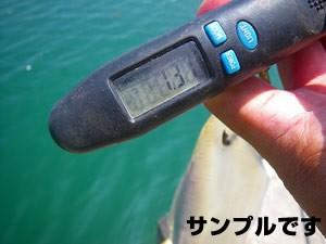 釣果報告に必要な画像2